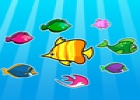 Colorful Fish Matching